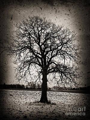 Winter Tree Art Print by Elena Elisseeva