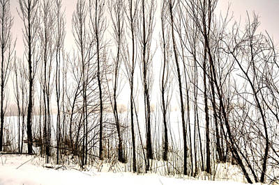 Jerry Sodorff Royalty-Free and Rights-Managed Images - Winter Tree Fence 13283 by Jerry Sodorff