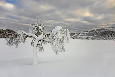 Winter Wonderland Photograph - Winter Tree by Gry Thunes