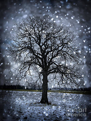 Winter Tree In Snowfall Art Print by Elena Elisseeva