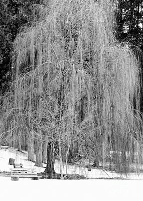 Photograph - Winter Tree In Spokane - Black And White by Carol Groenen