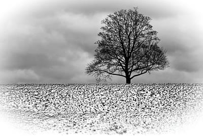 Photograph - Winter Tree by Inge Riis McDonald