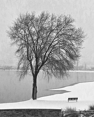 Winter Tree Art Print by John  Greaves
