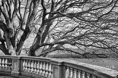 Photograph - Winter Tree by Kate McKenna