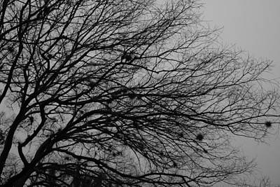 Winter Tree Art Print by Kimberly Oegerle