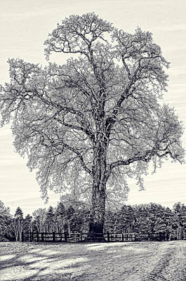Photograph - Winter Tree by Nick Field