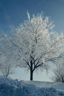 Photograph - Winter Tree by Patrick Murphy