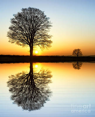 English Countryside Photograph - Winter Tree Reflections by Tim Gainey
