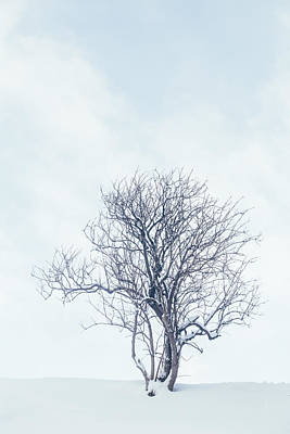Photograph - Winter Tree by Soren Egeberg