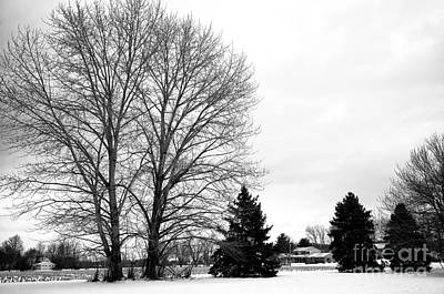 Photograph - Winter Tree Style by John Rizzuto