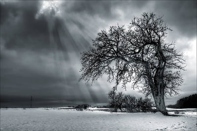 Mood Photograph - Winter Tree by EXparte SE