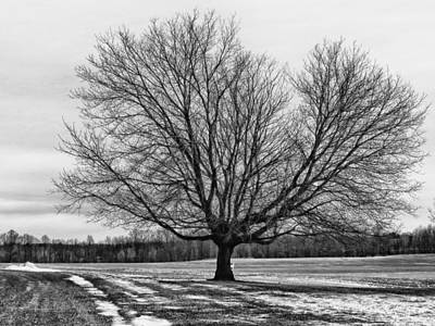 Winter Tree Art Print by Susan Desmore