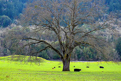Winter Tree With Cows By The Umpqua River Art Print