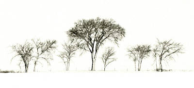 Photograph - Winter Treeline by Michael Moschogianis