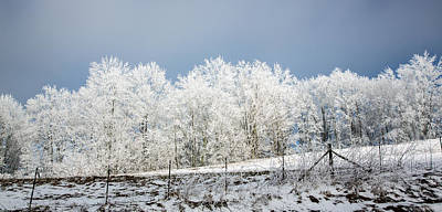 Photograph - Winter Treeline Panorama by John Haldane