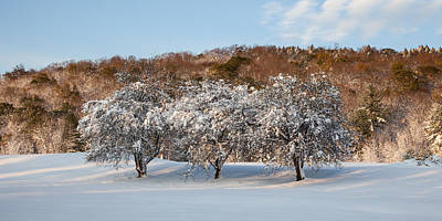 Photograph - Winter Trees by Adam Caron