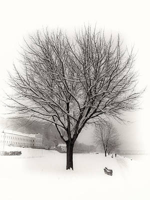 Photograph - Winter Trees Along The Danube At Ybbs by Menega Sabidussi