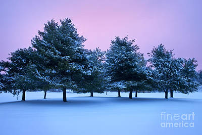 Snowy Night Photograph - Winter Trees by Brian Jannsen