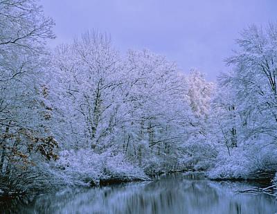 Winter Trees Art Print by Carolyn Smith