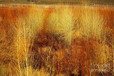 Photograph - Winter Trees Color 5 by Roena King