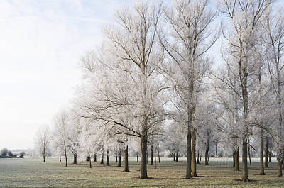 Art Print featuring the photograph Winter Trees by David Isaacson