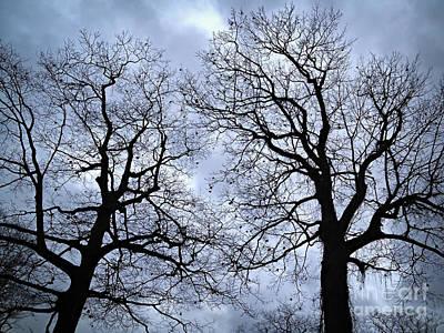Photograph - Winter Trees by Elena Elisseeva