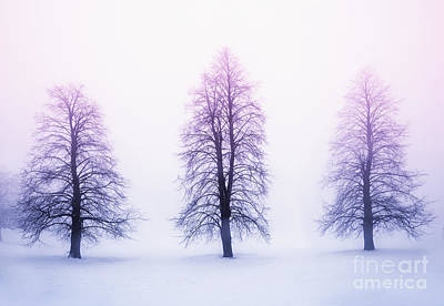 Curated Beach Towels - Winter trees in fog at sunrise by Elena Elisseeva