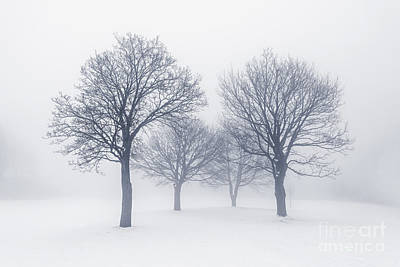 Winter Trees In Fog Print by Elena Elisseeva