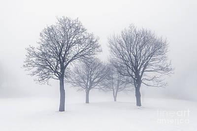 Frosty Photograph - Winter Trees In Fog by Elena Elisseeva