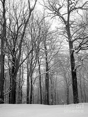 Photograph - Winter Trees In The Snow by Cynthia  Clark