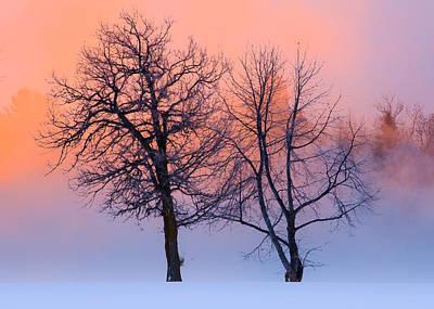Nik Plugins Photograph - Winter Trees by Jakub Sisak