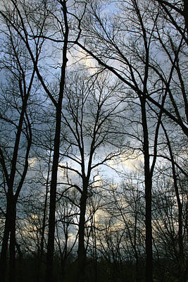 Photograph - Winter Trees by Jane Eleanor Nicholas