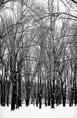 Photograph - Winter Trees by John Rizzuto