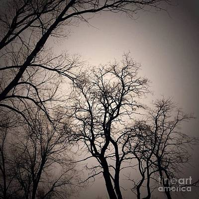 Photograph - Winter Trees by LeLa Becker