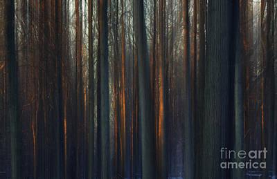 Nada Mas Llc Photograph - Winter Trees by Marco Crupi