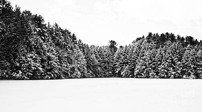 New Hampshire Photograph - Winter Trees Mink Brook Hanover Nh by Edward Fielding