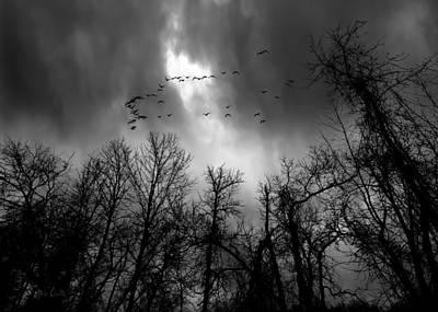 Winter Trees Moving Sky Print by Bob Orsillo