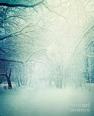 Winter Trees Art Print by Mythja  Photography