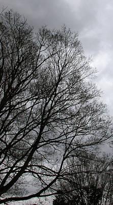 Winter Trees Number Three Art Print
