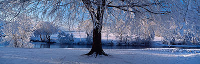 Snowy Brook Photograph - Winter Trees Perkshire Scotland by Panoramic Images