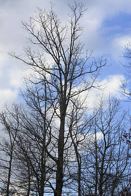 Photograph - Winter Trees by Robert Hebert
