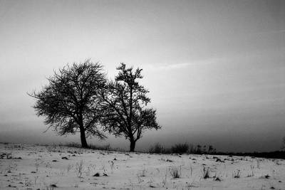 Photograph - Winter Trees by Tomasz Dziubinski