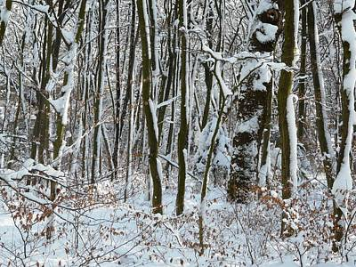 Photograph - Winter Trees by Valerie Ornstein