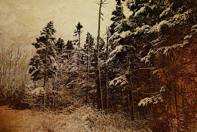 Photograph - Winter Trees by WB Johnston