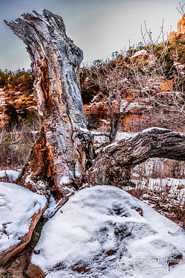 Photograph - Winter Trunk by Christopher Holmes
