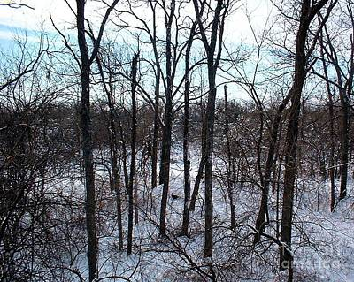 Photograph - Winter Turkey Woods by Mark McReynolds