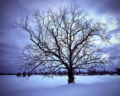 Photograph - Winter Twilight Tree by Jaki Miller