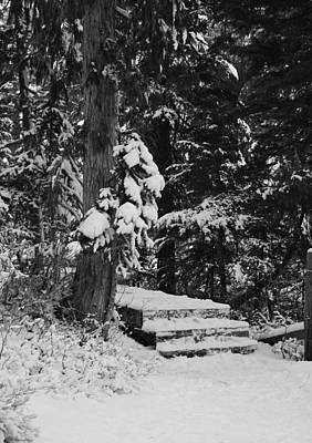 Photograph - Winter Walk - Bw by Marilyn Wilson