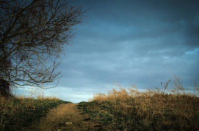 Photograph - Winter Walk by Cara Moulds