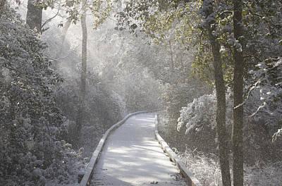 Photograph - Winter Walk by Greg Vizzi